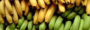 Кому не можна їсти бананів: поради дієтолога