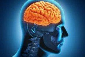 Чрезмерная тренировка вызывает усталость мозга