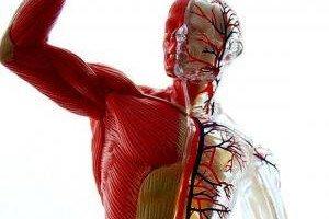 Как привести кожу в тонус после похудения