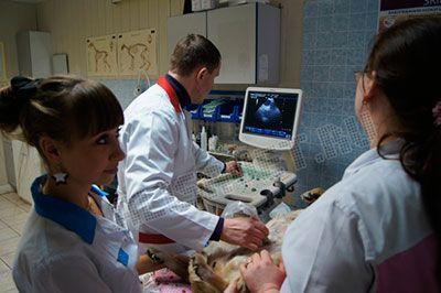 Что включает в себя процедура УЗИ в ветклинике?